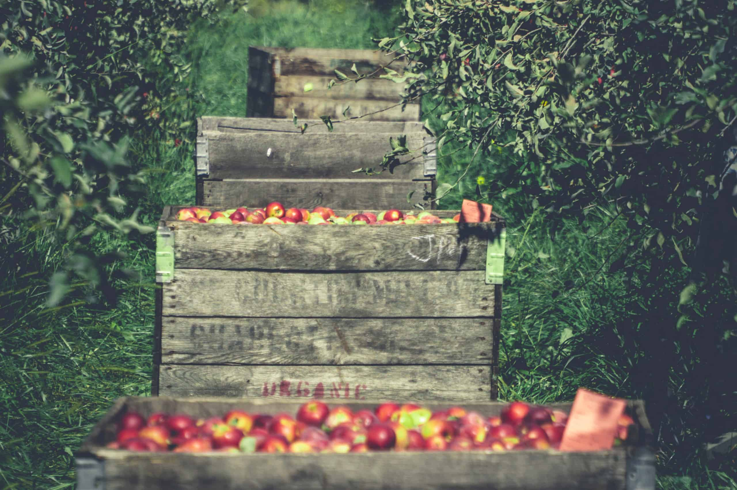 Yitto Paws uses only the finest ingredients like organic apples, and we believe in creating honest food you can trust.