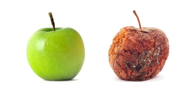 Which apple would you choose? Human grade dog treats choose real, delicious fruit, not fruit that is rotting and should be composted.