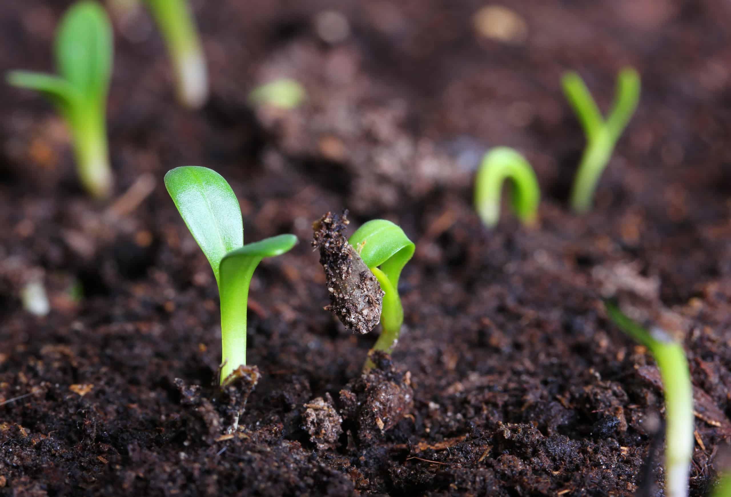 Organic farming helps build better soil
