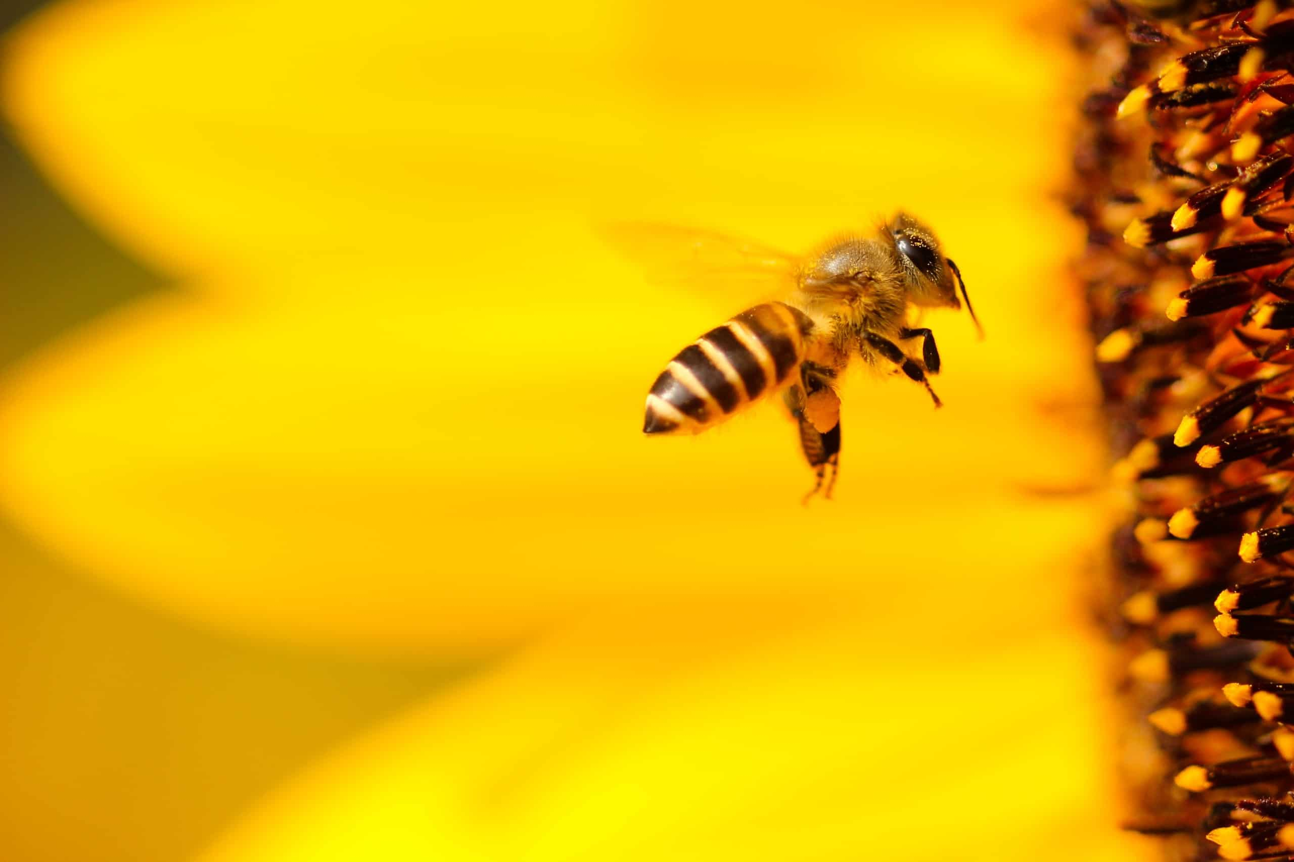 organic farming helps sustain bees and other beneficial insects