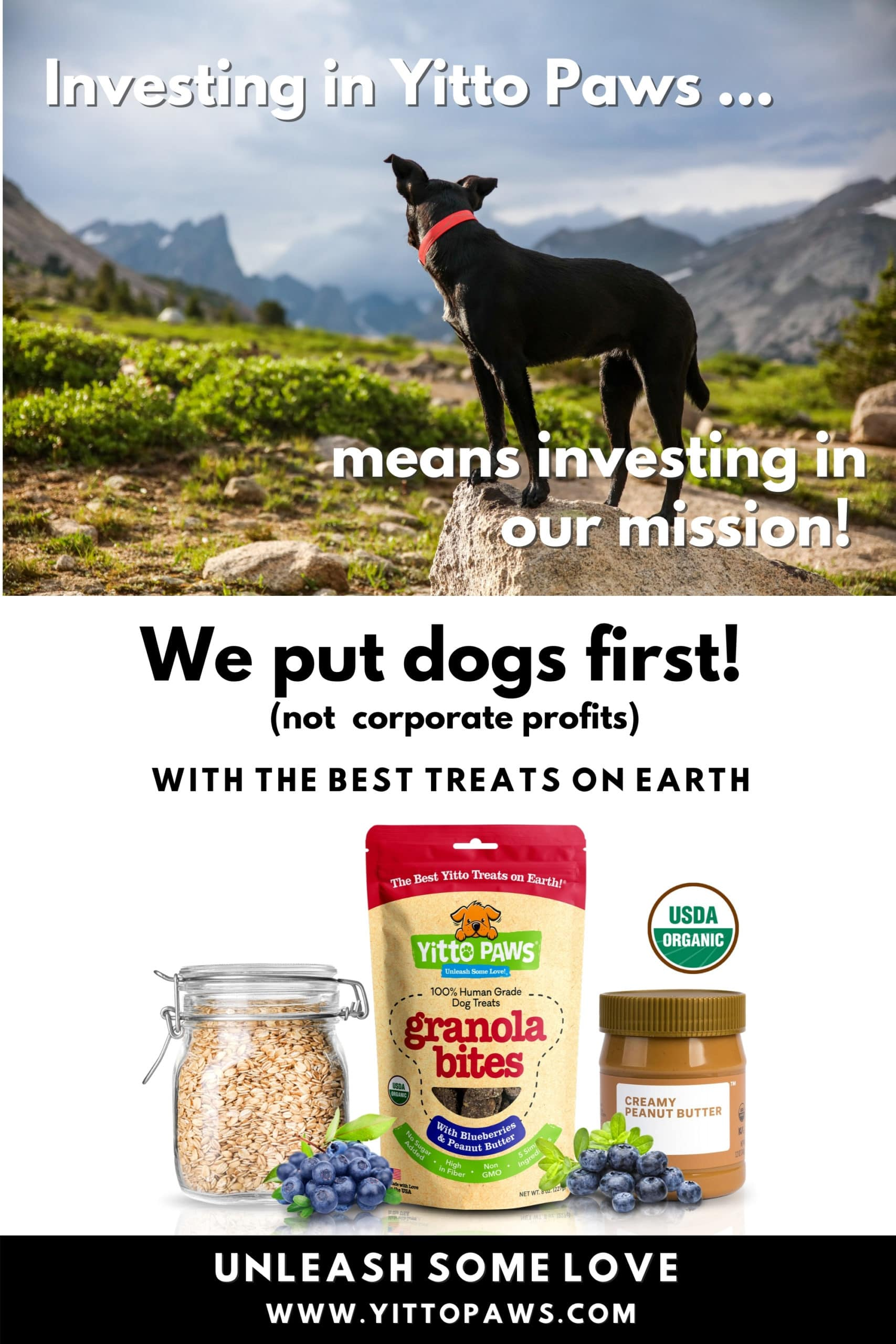 Investing in Yitto Paws mean investing in our mission to put dogs first!