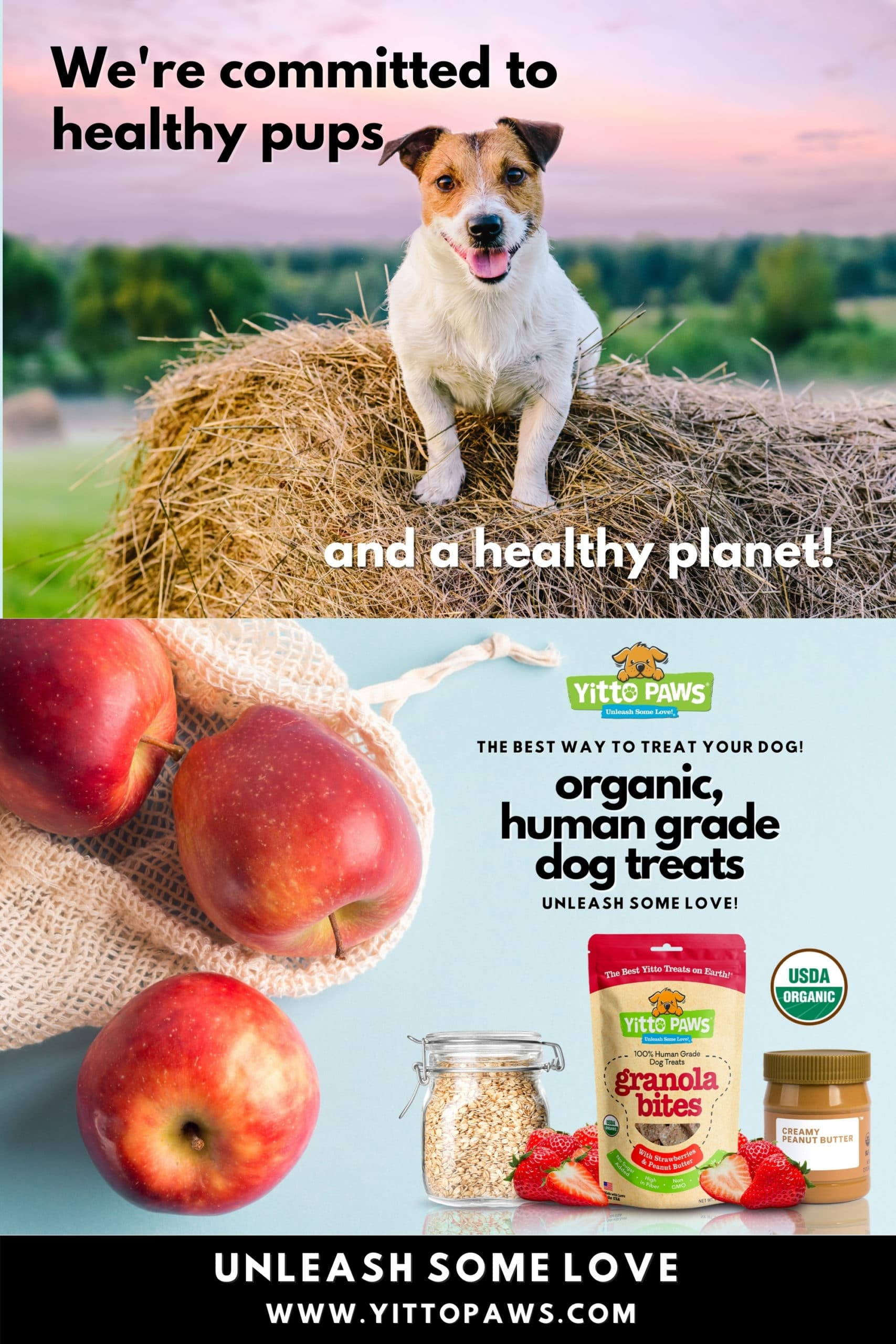 Supporting a Healthy Planet is central to all we do at Yitto Paws. We know our families and their dogs need a strong Mother Earth to thrive!